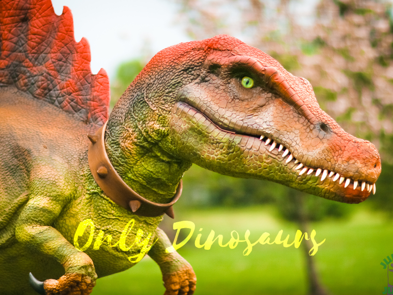 Dinosaur-facts-for-kids-There-were-many-species-of-dinosaurs