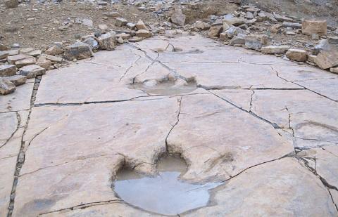 How-do-dinosaur-footprints-survive2