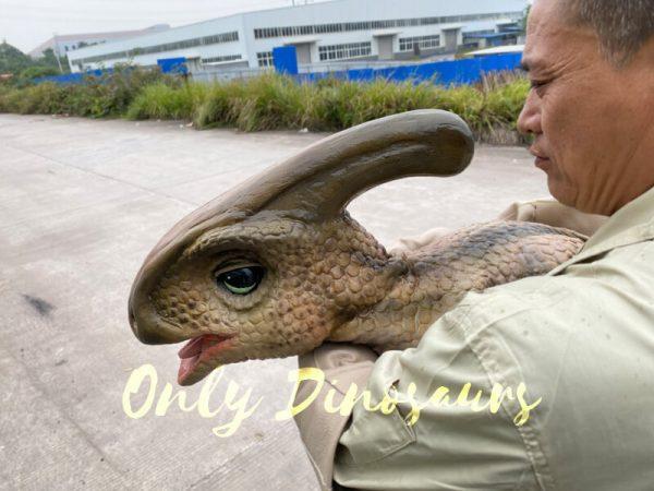 Loveable-Baby-Parasaurolophus-with-False-Arm-1