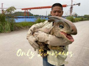 Loveable Baby Parasaurolophus with False Arm