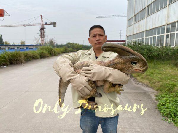 Loveable-Baby-Parasaurolophus-with-False-Arm-4
