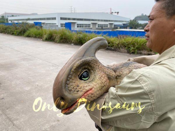 Loveable-Baby-Parasaurolophus-with-False-Arm-5