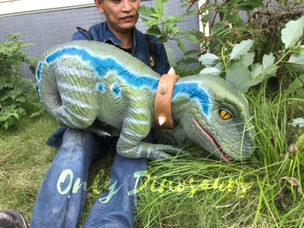 Realistic-Raptor-Hand-Puppet-with-Beautiful-Eyes-6