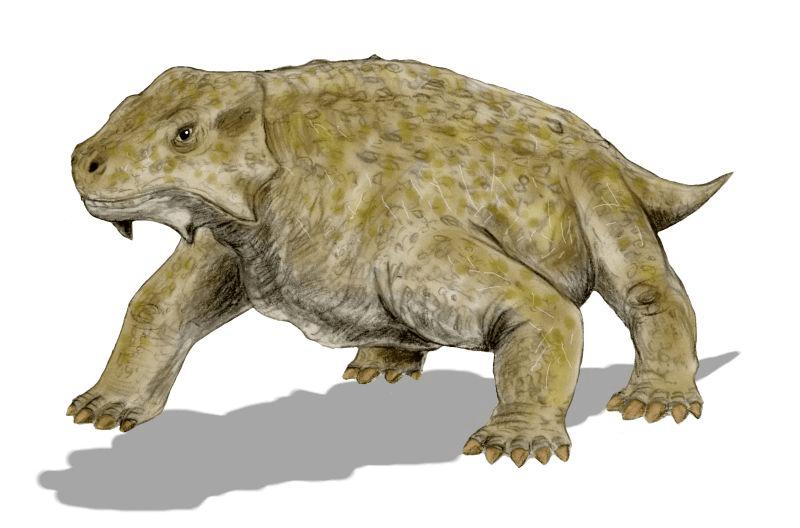 The-Top-15-Ancient-Reptiles-Pareiasaurs
