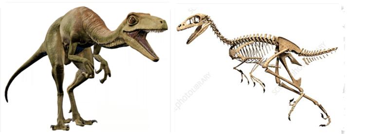 Troodon1
