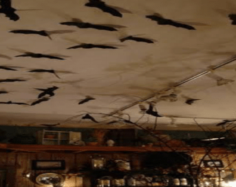 What-are-some-good-haunted-house-ideas-Hang-some-bats-upside-down