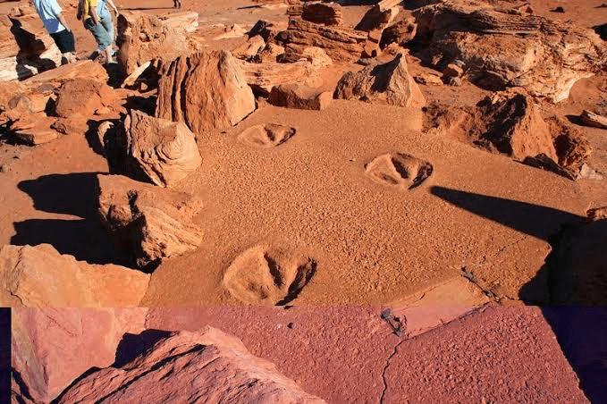 Where-can-I-see-dinosaur-footprints-Gantheaume-Point-Australia
