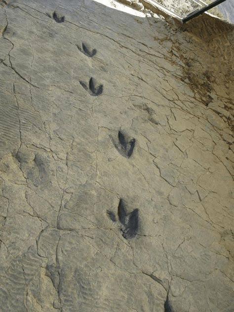 Where-can-I-see-dinosaur-footprints-La-Rioja-Spain