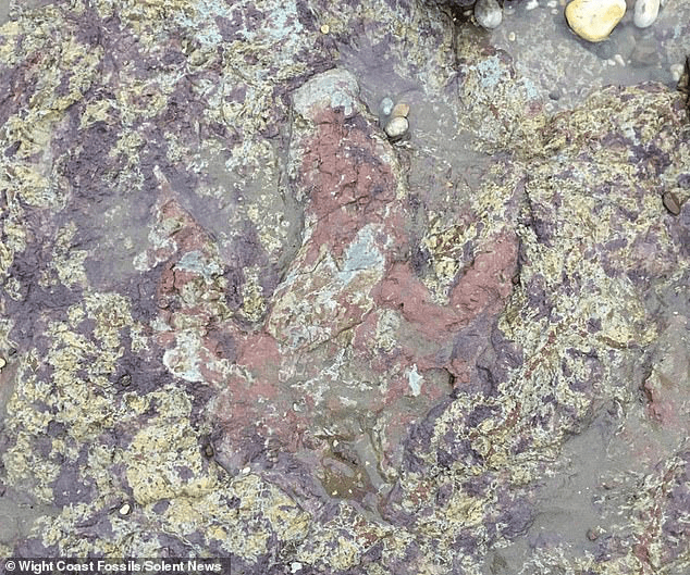 Where-can-I-see-dinosaur-footprints-Lsle-of-Wight