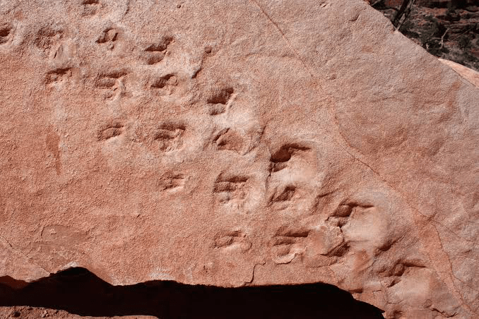 Where-can-I-see-dinosaur-footprints-Petrified-Forest-National-Park