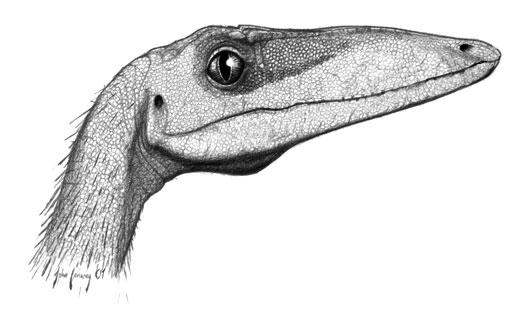 15-Cute-Dinosaurs-Thatll-Melt-Your-Heart-Make-You-Laugh-Coelophysis