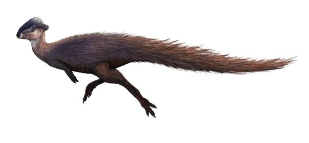 15-Cute-Dinosaurs-Thatll-Melt-Your-Heart-Make-You-Laugh-Stegoceras-validum