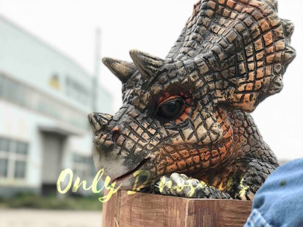 Adorable-Crate-Baby-Triceratops-Puppet4