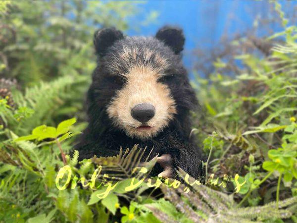 Adorable-Handheld-Baby-Black-Bear-Puppet5