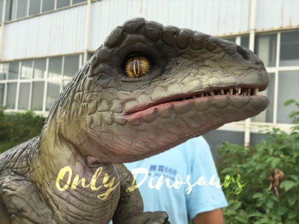 Attractive-Realistic-Baby-Velociraptor-Hand-Puppet4
