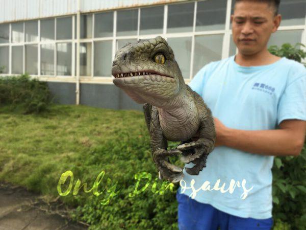 Attractive-Realistic-Baby-Velociraptor-Hand-Puppet6