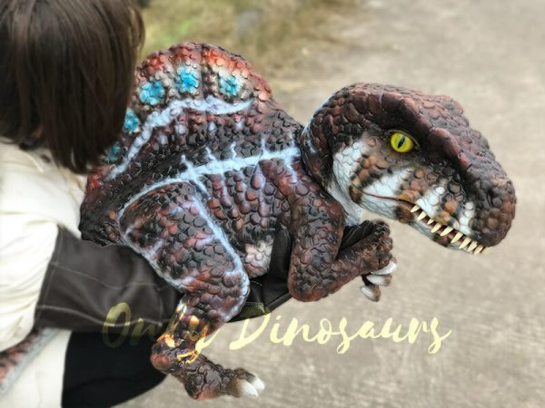 Brown-Adorable-Spinosaurus-puppet-sits-on-the-hand(5)