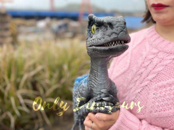 Cute-Mini-Baby-Velociraptor-Cub-with-Gray-Blue-Color2
