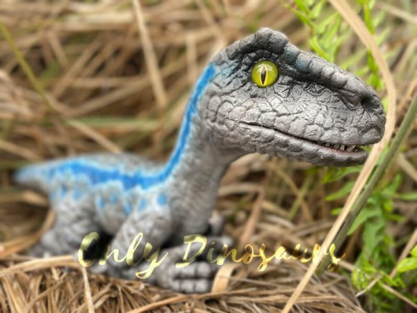 Cute-Mini-Baby-Velociraptor-Cub-with-Gray-Blue-Color4