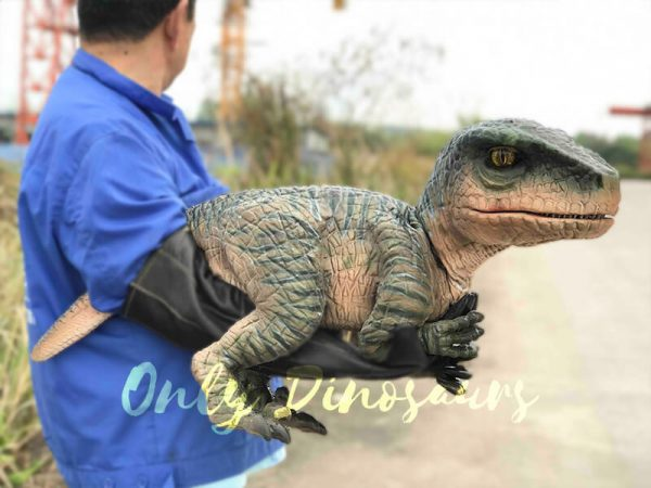 Cutest-Baby-Raptor-with-Gloves2