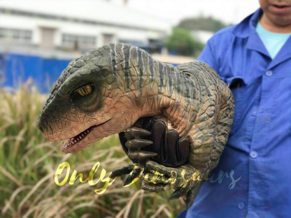 Cutest-Baby-Raptor-with-Gloves4
