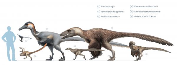 Dromaeosaurs