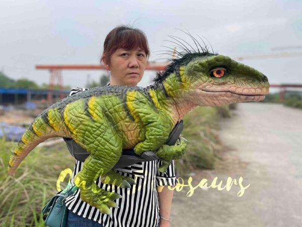 Full-Body-Baby-Velociraptor-Cub-on-sale3
