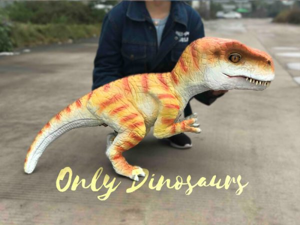 Hand-held-Baby-Tyrannosaurus-Rex-with-adorable-appearance4