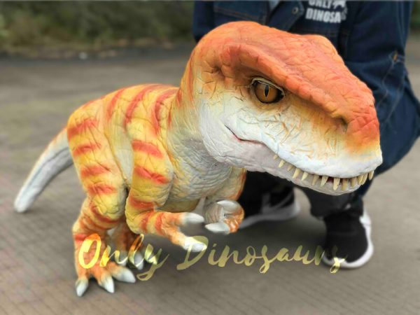 Hand-held-Baby-Tyrannosaurus-Rex-with-adorable-appearance5