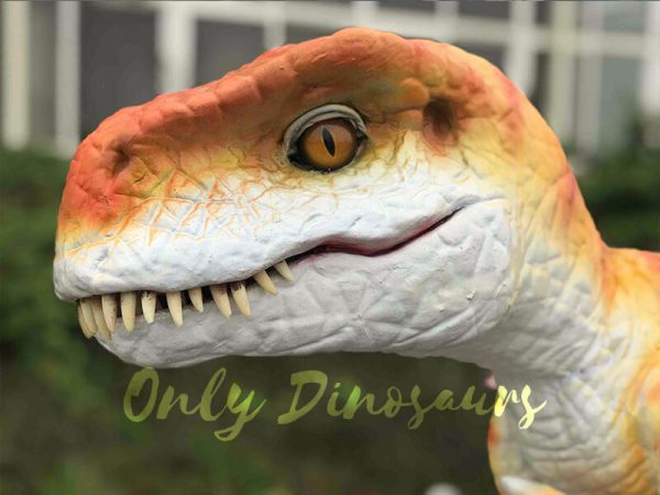 Hand-held-Baby-Tyrannosaurus-Rex-with-adorable-appearance6
