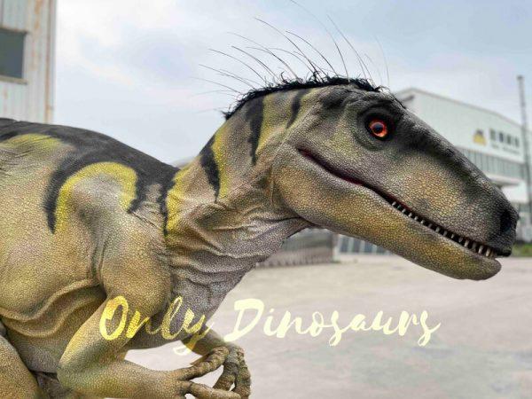 Hidden-Legs-Velociraptor-Suit-for-Dinosaur-Event5