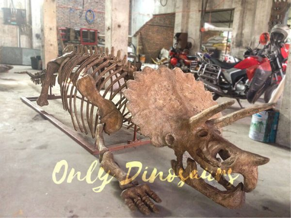 Museum-quality-Triceratops-Skeleton-Replica-for-Sale-2