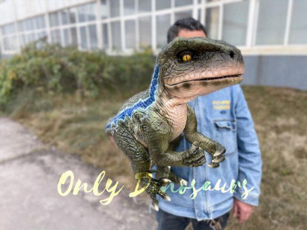 Naughty-Full-Body-Velociraptor-Puppet3
