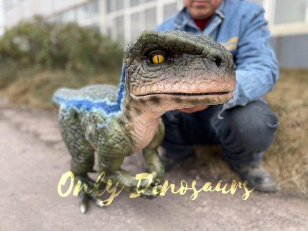 Naughty-Full-Body-Velociraptor-Puppet5