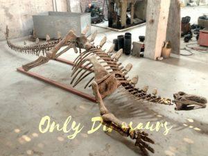 Realistic Dinosaur Stegosaurus Bone for Exhibits