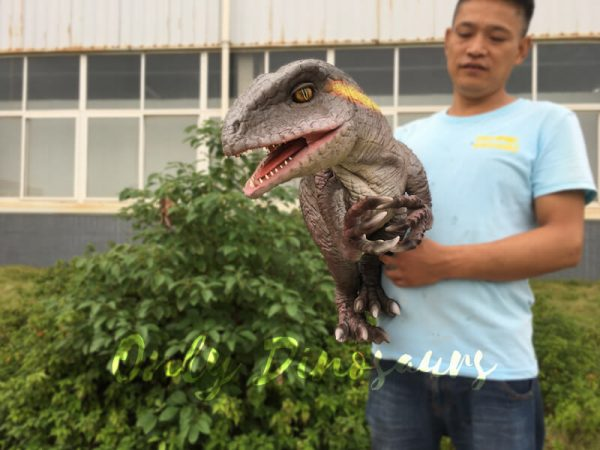 Realistic-Yellow-Striped-Baby-Velociraptor-Puppet3