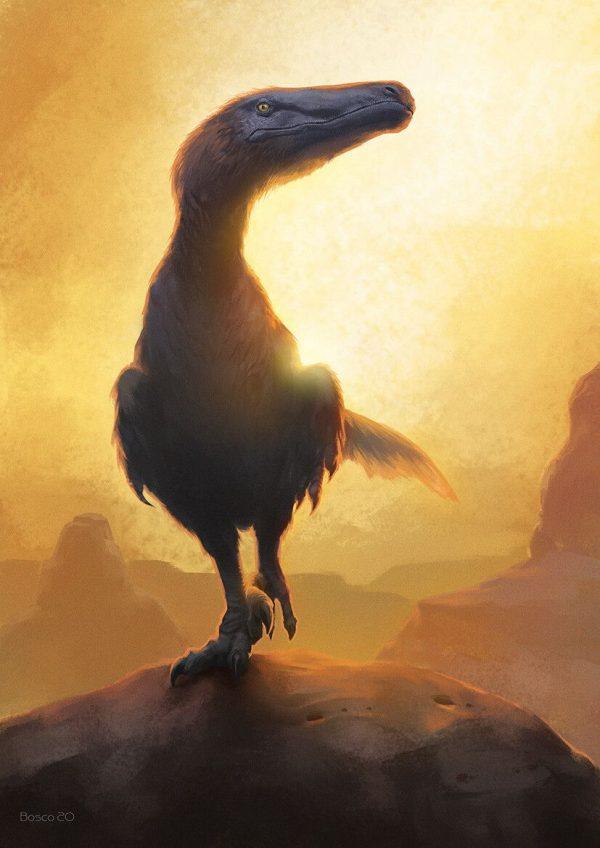 Velociraptor-Jon-Bosco