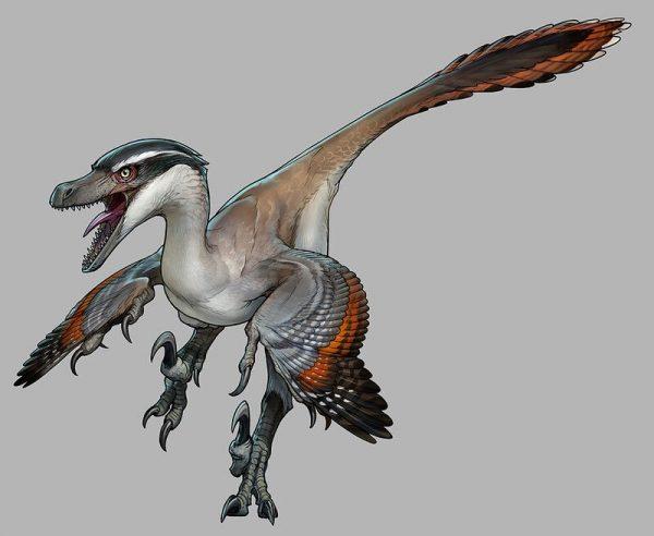 Velociraptor-Mr-Jack