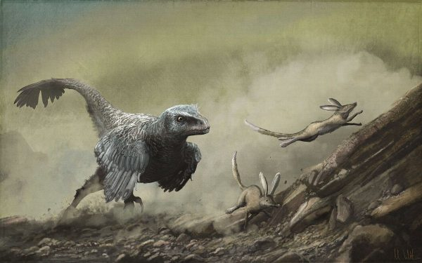 Velociraptor-and-Zalambdalestes-2019