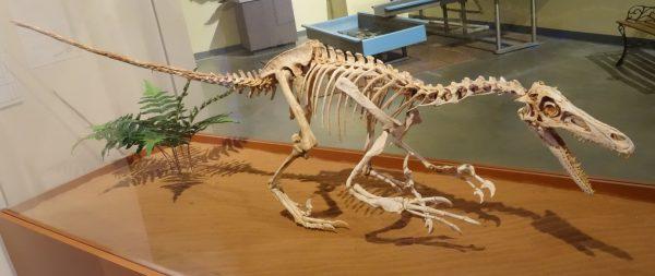 Velociraptor_fruita_2