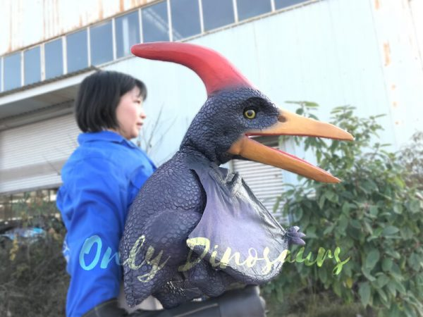 Awesome-Baby-Pterosaur-Puppet-With-Large-Crested5