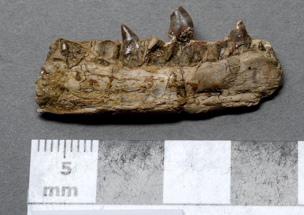 Dinosaur-Jurassic-Coast-World-Heritage-Site