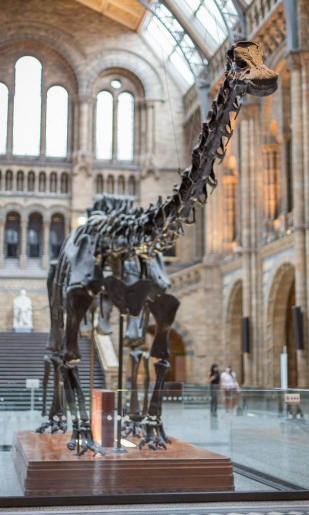 Dippy-the-Diplodocus-set-to-roam-earth-again-as-it-heads-to-Ulster-Museum