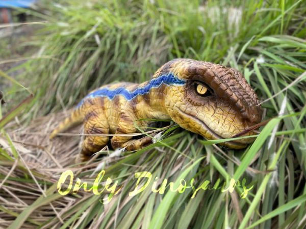 Fantastic-Raptor-Dinosaur-Full-body-Hand-Puppet1
