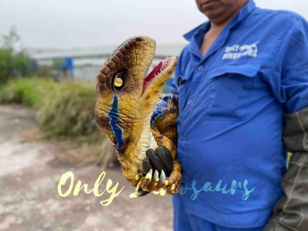 Fantastic-Raptor-Dinosaur-Full-body-Hand-Puppet4