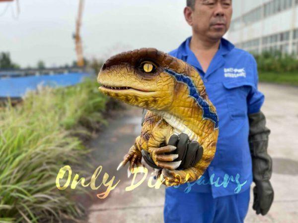 Fantastic-Raptor-Dinosaur-Full-body-Hand-Puppet5