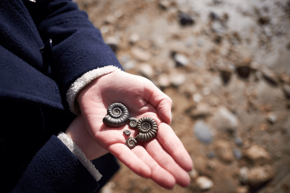 Fossil-Collecting-Jurassic-Coast-World-Heritage-Site
