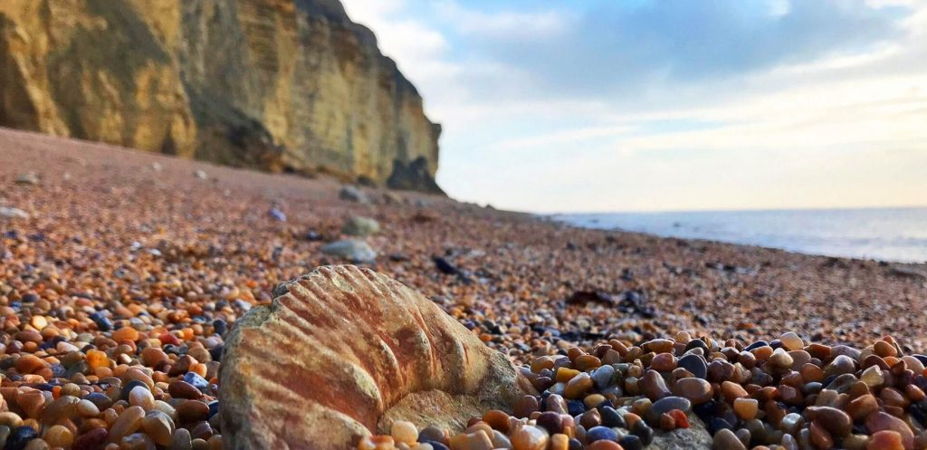 Fossil-Hunting-on-the-Jurassic-Coast