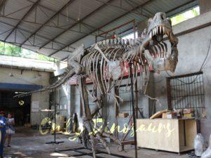 Giant Tyrannosaurus Rex Skeleton for Museum