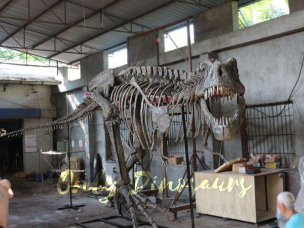 Giant-Tyrannosaurus-Rex-Skeleton-for-Museum3